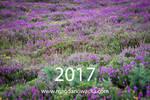 Calendar 2017 by schelly