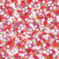 White Blossoms on a Vibrant Magenta by amberwillow
