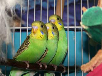 threes company by parrots4life