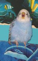 rawr by parrots4life