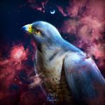 Peregrine Falcon | Dreams