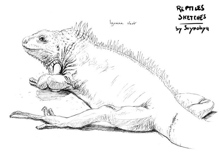 Iguana live sketch by Ssynahya