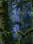 The Forest Surreal