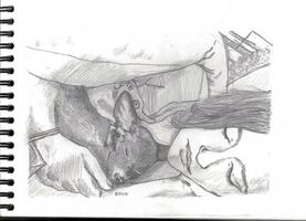Sleeping dog and sleeping girl 1 by kinow
