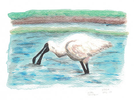 Royal Spoonbill by kinow