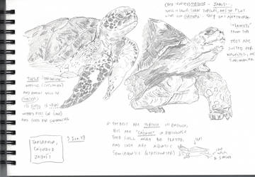 Turtle, Tortoise vs. Tartaruga, Jabuti, and Cagado