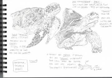 Turtle, Tortoise vs. Tartaruga, Jabuti, and Cagado by kinow