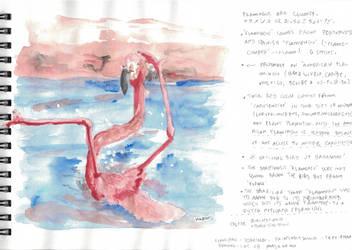 Clumsy Flaminco sketchbook page