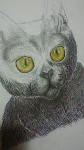 Soft Kitty by xteabythemoon