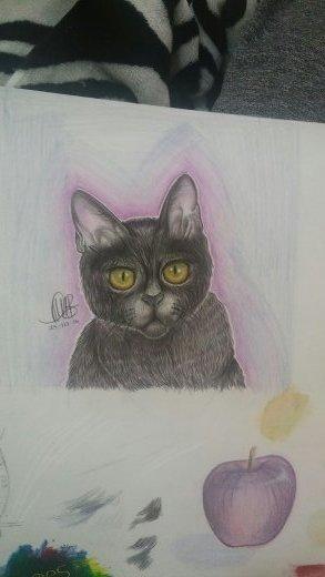 Soft Kitty, And an Apple by xteabythemoon