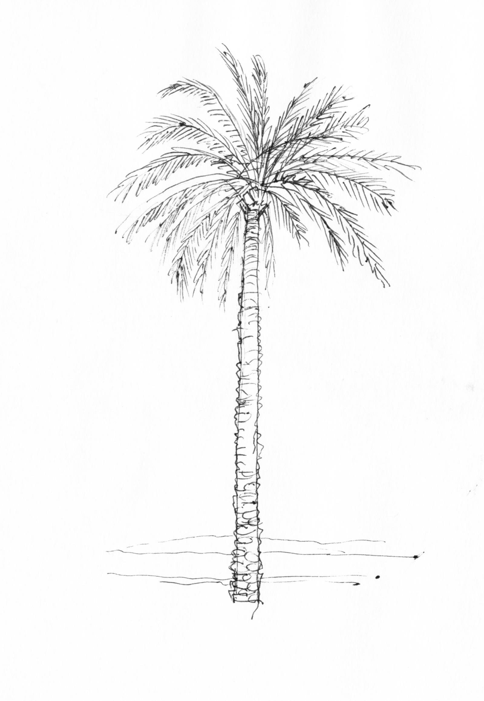 Image Result For Tropical Island Coloring