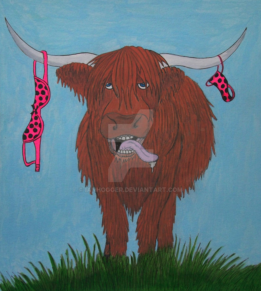 Lucky Highland Coo by ianhogger