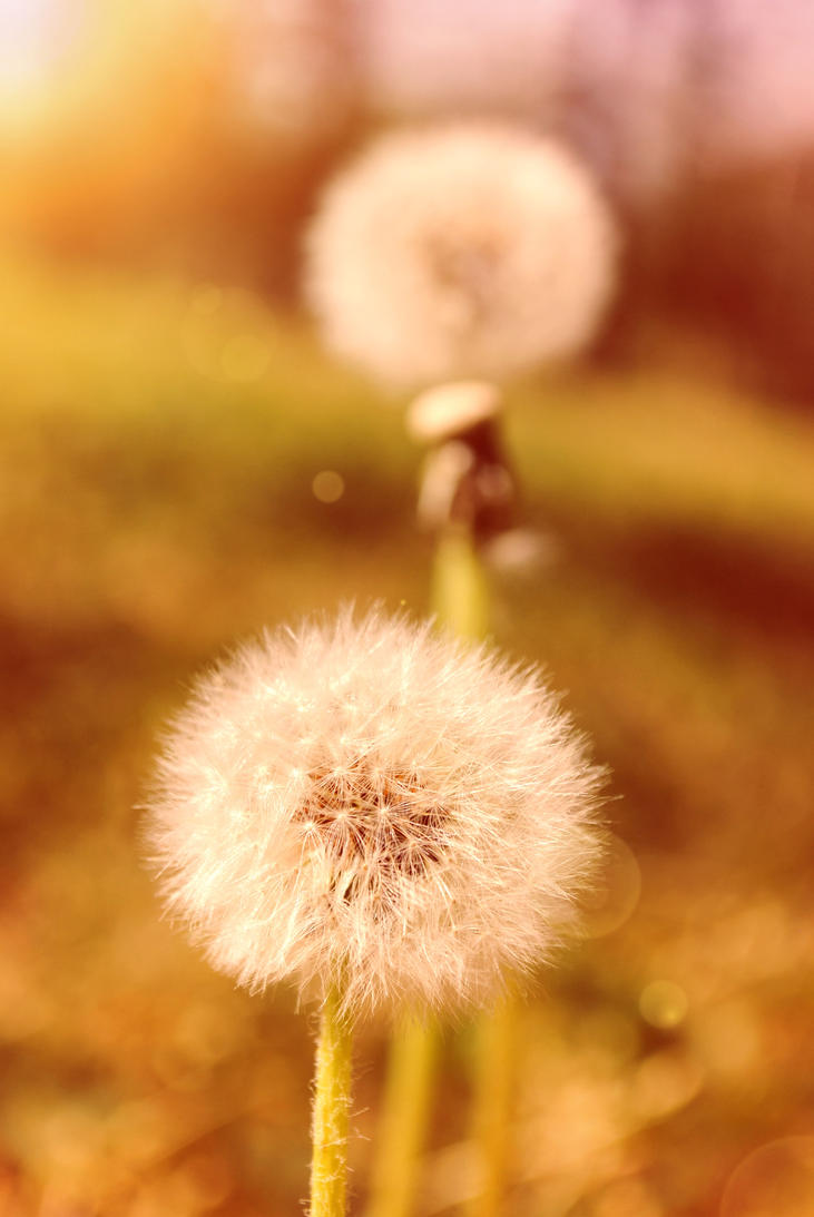 Make a wish. by lamour-means-love