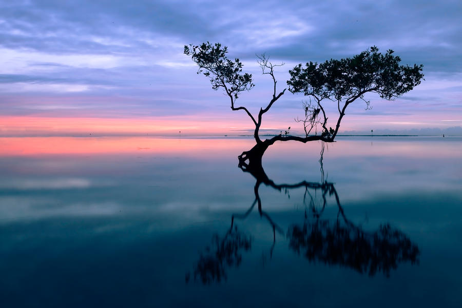 Mangrove by B-LightPhotography