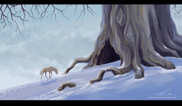 Winters Glow by Wild-Hearts