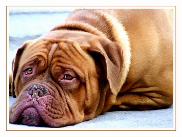 Sad dog by Grofica