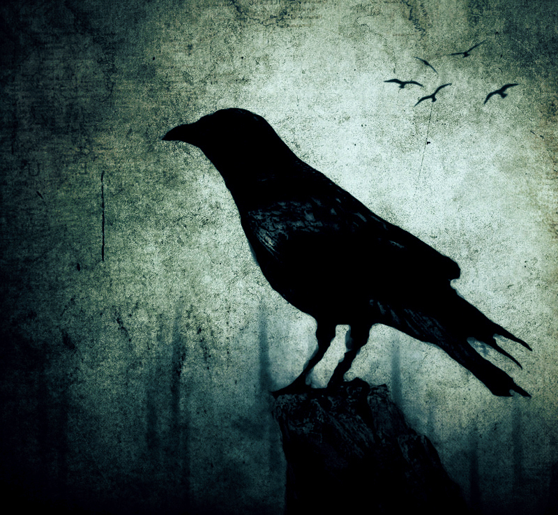 The Crow by nairafee on DeviantArt