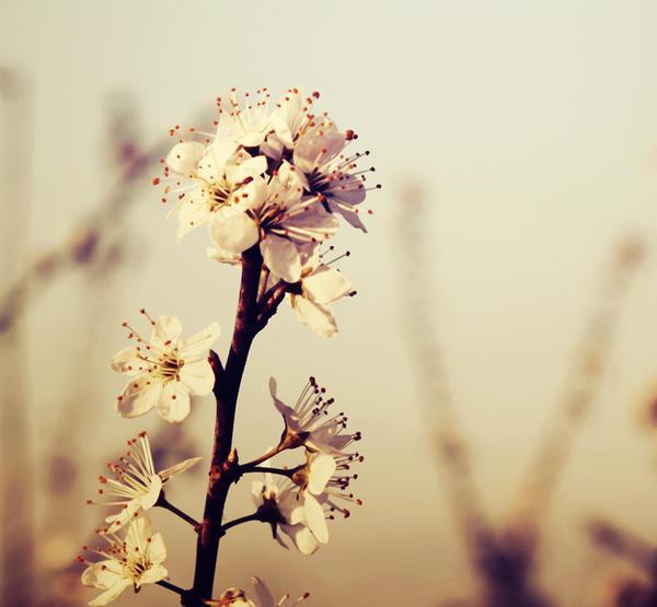 Spring by nairafee