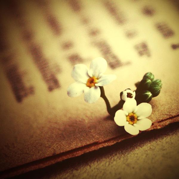 Za poeziju Lecture_by_nairafee