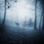 Night Whisperer by nairafee