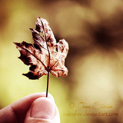 Tiny Leaf by nairafee