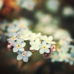 Spring Harbinger