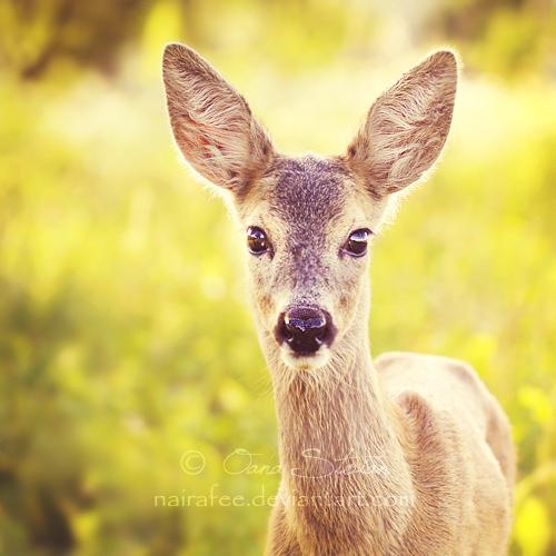 Deer by nairafee