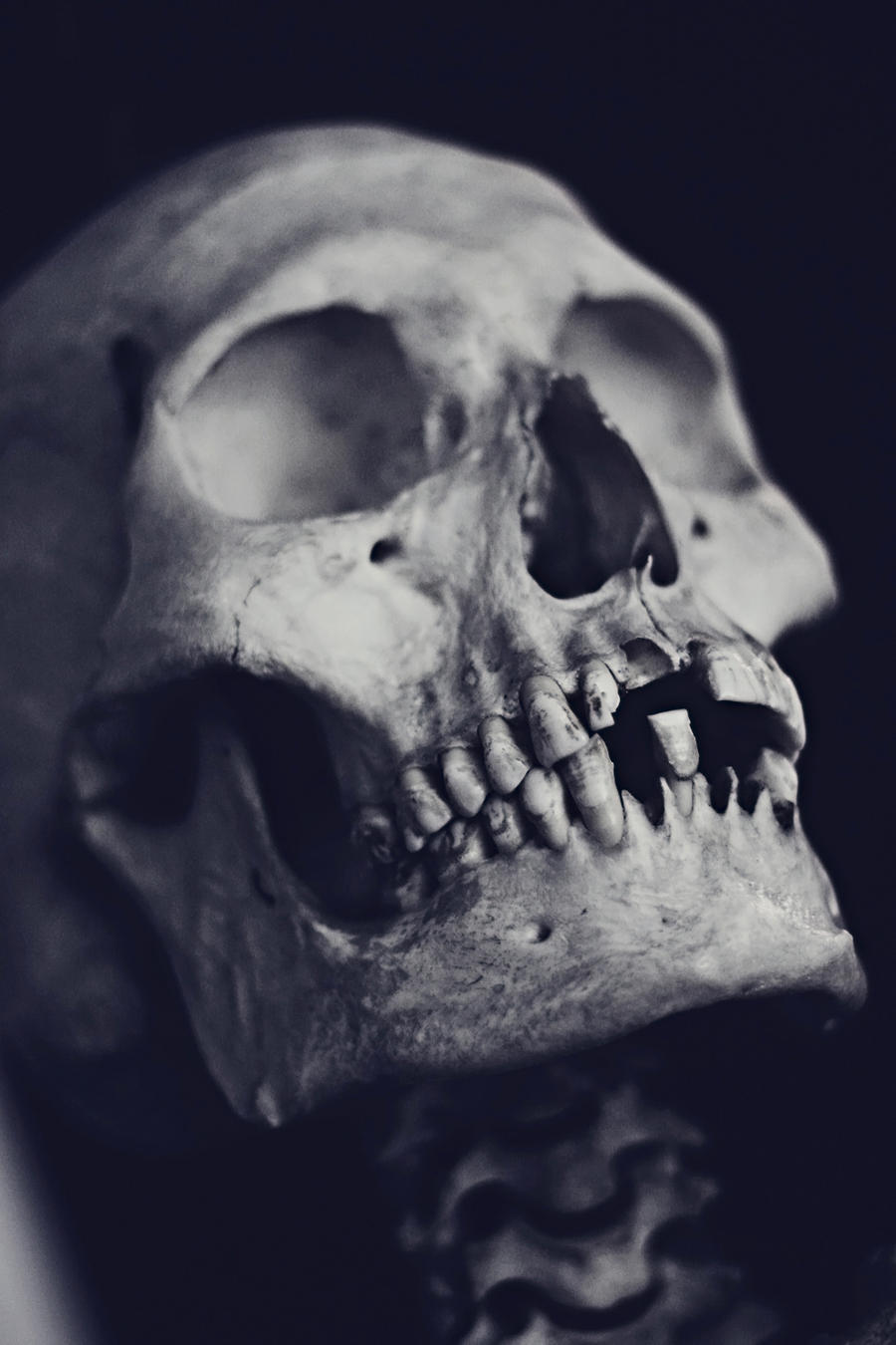 Human Skull by PurpleRook on DeviantArt
