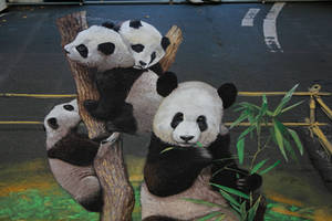 Panda Bears - fragment by Nikolaj-Arndt