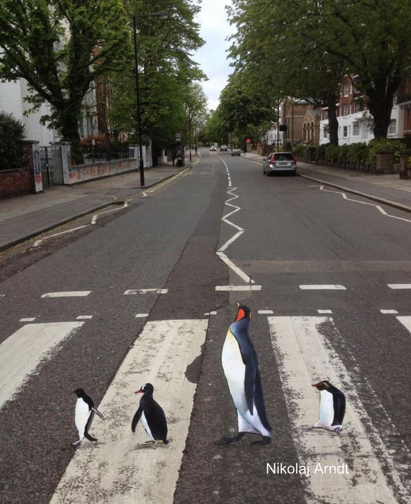 Penguins are rushing to the zoo ... by Nikolaj-Arndt
