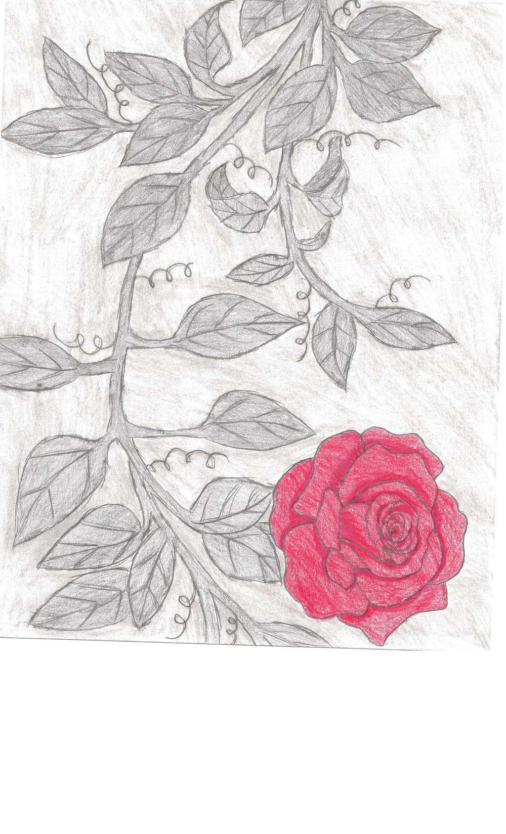 It's just a graphic of Decisive Rose Vine Drawing