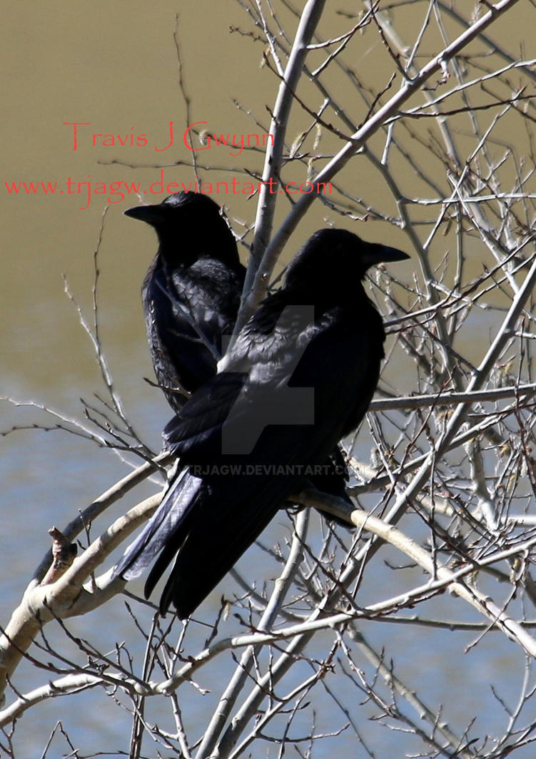 Janus Crows by TrJaGw