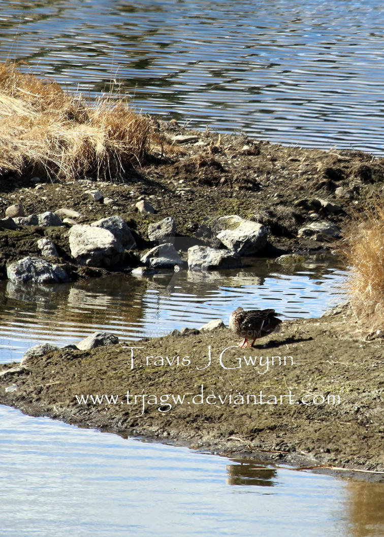 Duck Pond 3 by TrJaGw