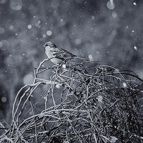 loneyless in the rain by mohdfikree