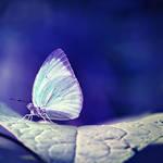 ultravioletfly by mohdfikree