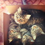 4 cats in 1 box by mohdfikree