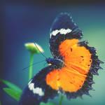 darkfly by mohdfikree