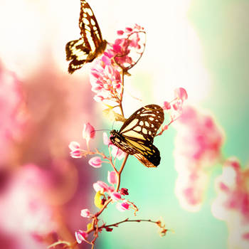 romanticflies by mohdfikree