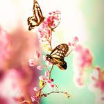 romanticflies