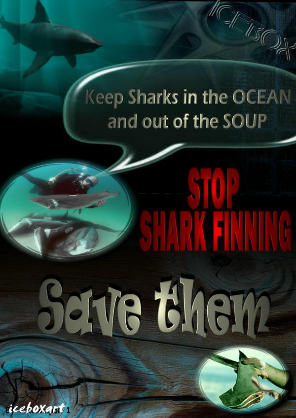 speech on shark finning essay Shark finning, the illegal fishing which involves the cutting of the sharks fins, and then the carcass is thrown back into the water this is wrong, just think for a minute, and put yourselves into the 'shoes' of those sharks.