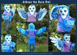 Athena the Barn Owl
