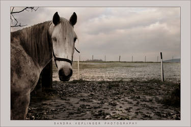 Horse by Staged