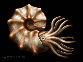 Mammites Ammonite