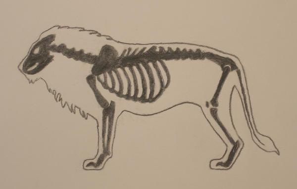 Lion Anatomy Study by gregfox on DeviantArt