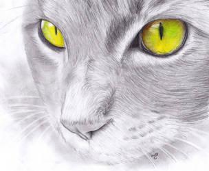 Cat by Laaury