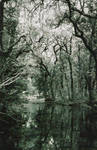 Woods. by Cautionary-Tale