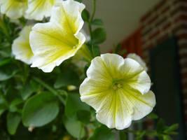 Bloom by CitizenOfZozo