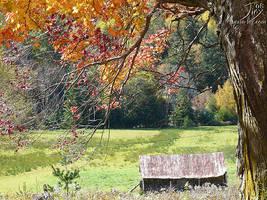 Autumn Shade by CitizenOfZozo
