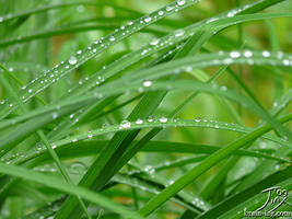 Dew Kissed by CitizenOfZozo
