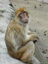 Barbary Ape by CitizenOfZozo